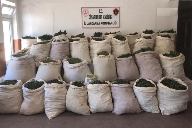 Lice'de 1 milyondan fazla kök kenevir ve 974 kilo esrar maddesi ele geçirildi