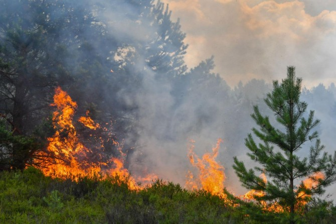 İzmir ve Kütahya'da orman yangınları