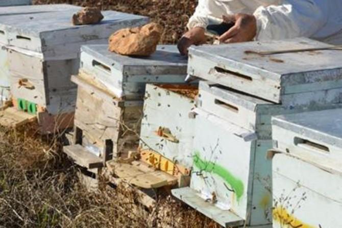 Kovan hırsızı şüphelisi arı sokması sonucu hayatını kaybetti
