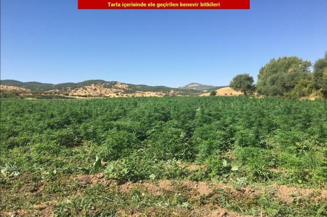 Six million root cannabis seized in Diyarbakır