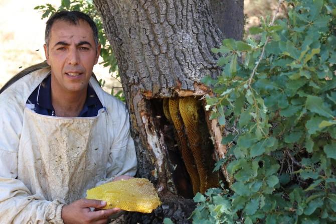 Organik şifa kaynağı: Ağaç kütüğü balı