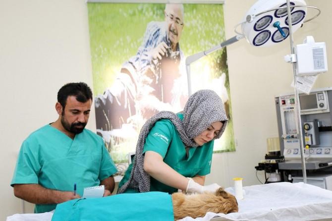 Mardin Hayvan Hastanesinde 1 ayda 150 hayvan ameliyat edildi
