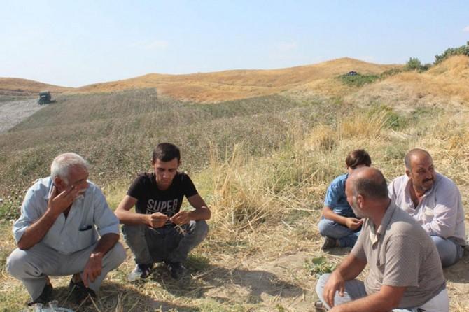 Pamuk üreticisi zamlardan dolayı dertli