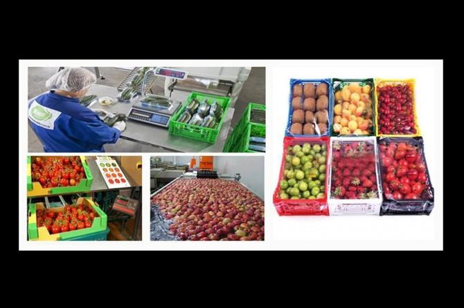 Meyve ve sebze sektörüne 640 milyon liralık yatırım