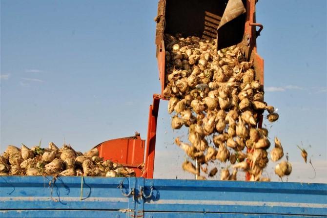 Şeker pancarı üreticileri fiyat ve hasattan memnun
