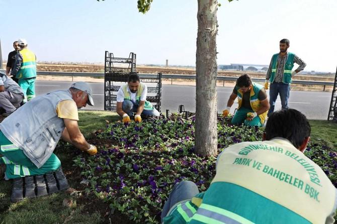 Orta refüj ve kavşaklara 1 milyon kışlık çiçek dikilecek