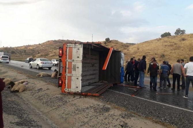 Baykan'da koyun yüklü kamyonet devrildi