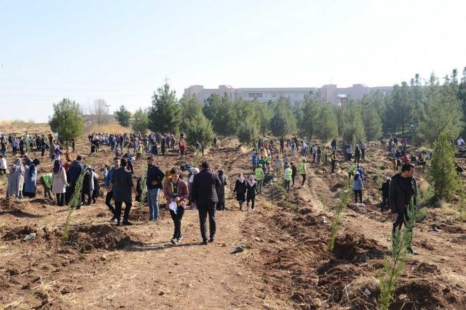 Diyarbakır'da 300 bin fidan dikildi