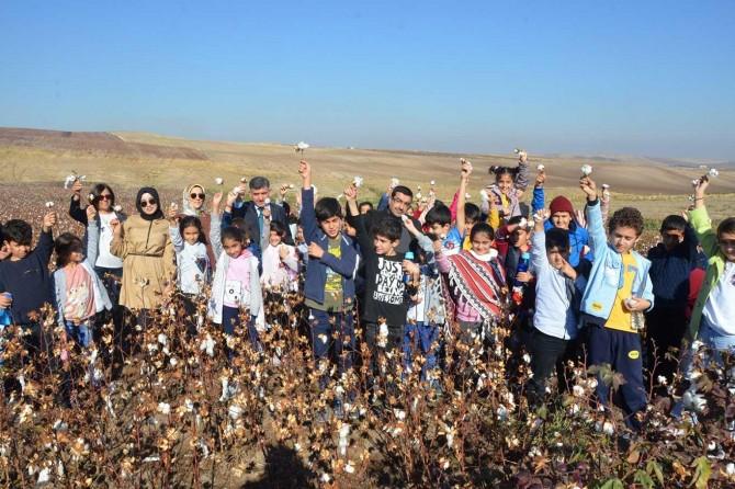 Minik öğrenciler pamuk ekimi ve hasadı hakkında bilgilendirildi