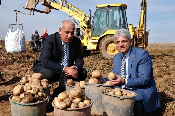 Patatesin kent ekonomisine katkısı yıllık 260 milyon TL'dir