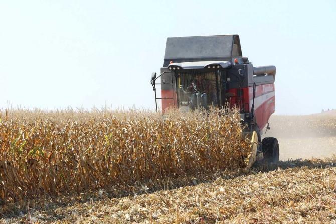 Mardin Ovası'nda mısır hasadı başladı