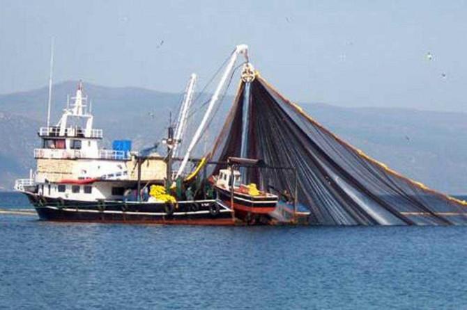 Türkiye Karadeniz'de kalkan balığı kotasında en büyük paya sahip oldu