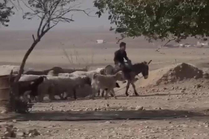 Rasulayn'da tarım ve hayvancılık yeniden başladı