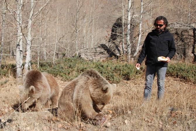 İnsanlar için tehlikeli hale gelen ayılar koruma altına alınmalı