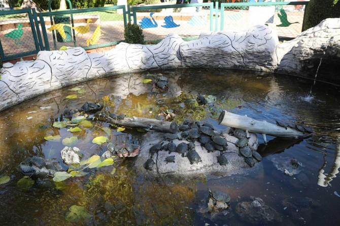 Sınırda ele geçirilen su kaplumbağaları Gaziantep'e getirildi