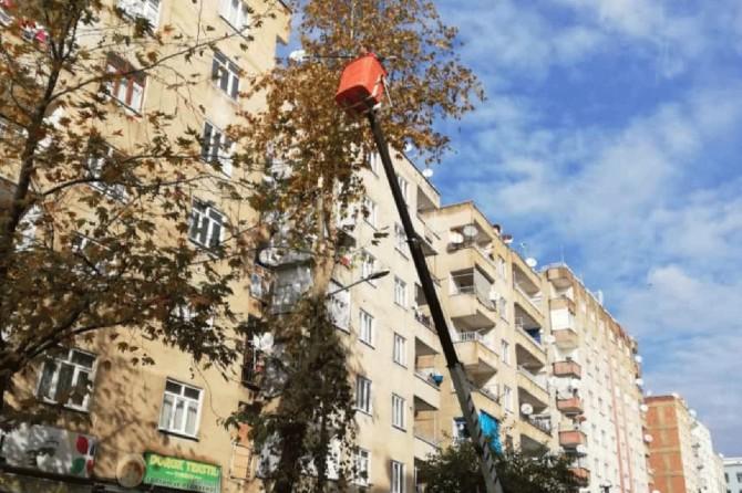 Ağaç bakımı ve budama işlemleri kaldıraç ve vinç desteğiyle gerçekleştiriliyor