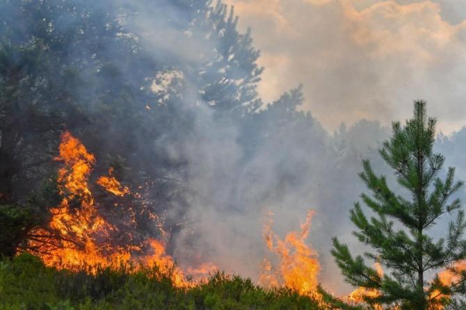 Ünye'de orman yangını: 100 hektar alan kül oldu