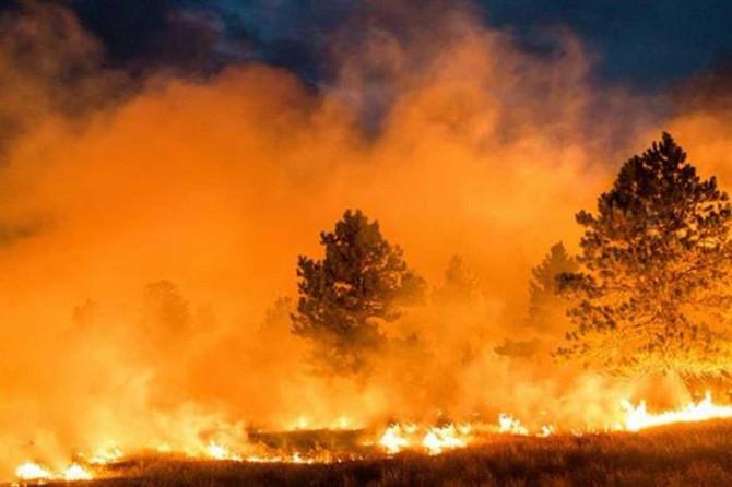 Trabzon'da çıkan 55 orman yangınının 51'i kontrol altında