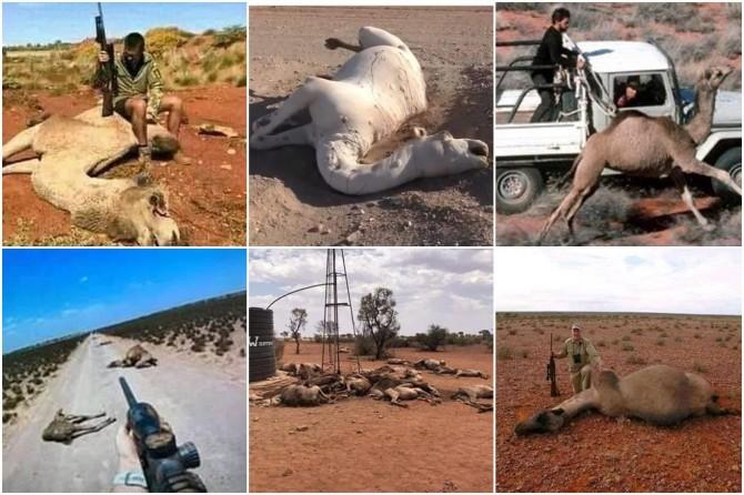 Havuzlu ev oranında dünya birincisi olan Avustralya develerin içtiği sudan rahatsız