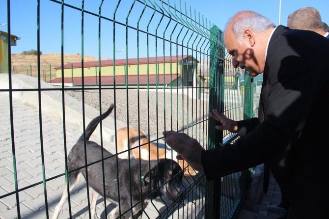 Hayvanlara yönelik işlenen suçlara karşı 'hayvan polisi' uygulaması geliyor