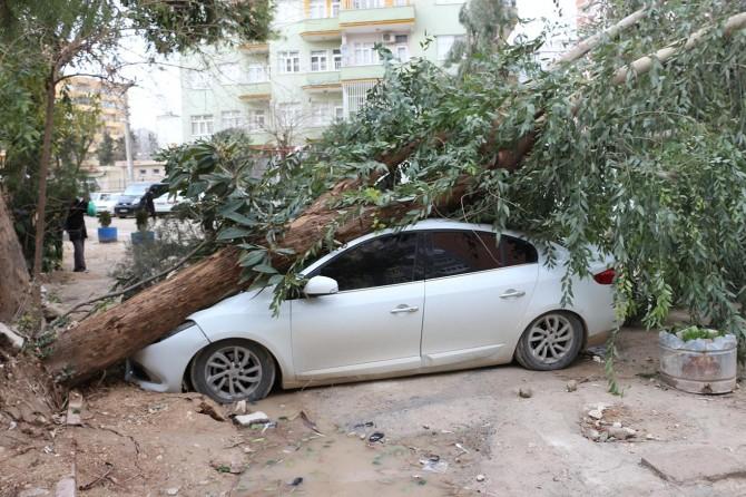 Mardin'de ağaç otomobilin üzerine devrildi
