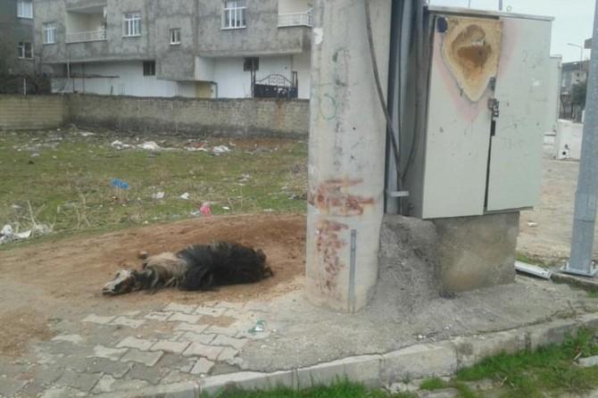 Nusaybin'de elektrik akımına kapılan keçi telef oldu