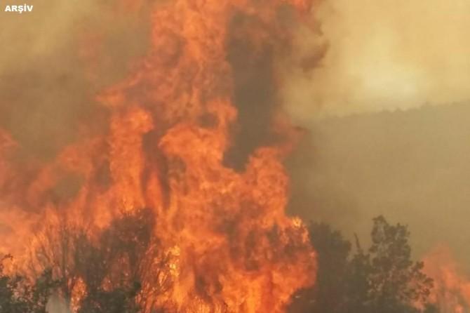 Bakan Pakdemirli'den İmralı Adası'ndaki yangını ilişkin açıklama