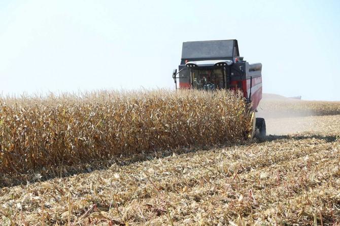"""Çiftçiler Derneği Başkanı Erbeyi: """"Pamuk ve mısır üretimini mecburiyetten bırakıyoruz"""""""