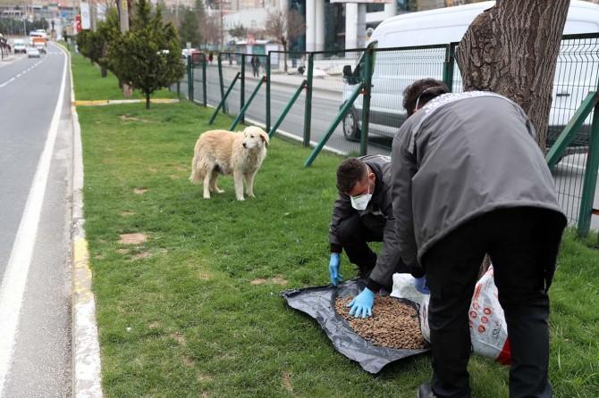 Mardin'de hayvanlar için sokaklara yiyecek bırakıldı