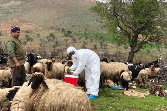 Bitkisel ve hayvansal üretimin aksamaması için çalışmalar sürüyor