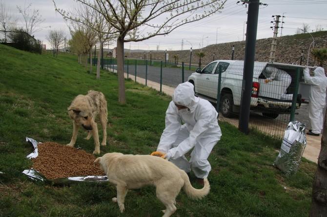 Şanlıurfa'da sokak hayvanları için yiyecek bırakıldı