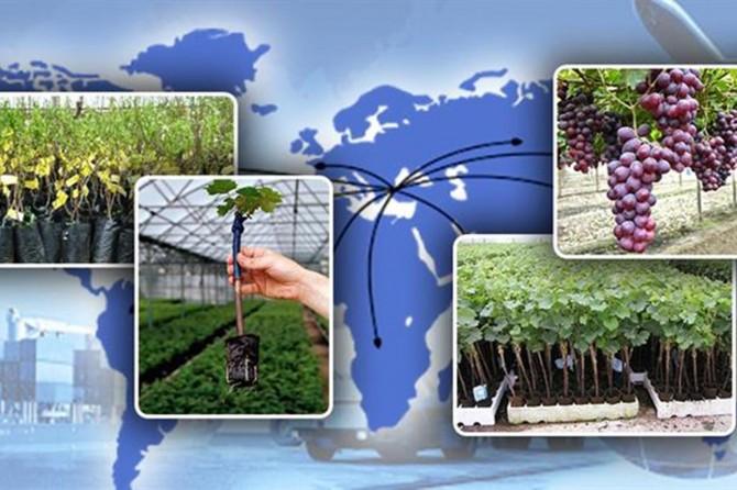 Fidan ihracatı ile ekonomiye 97 milyon dolarlık katkı sağlandı