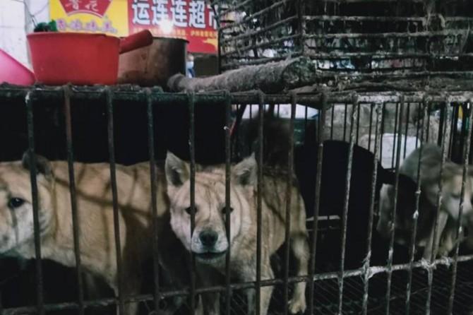 Çin'in Shenzhen şehrinde Coronavirus sonrası kedi ve köpek yemek yasaklandı