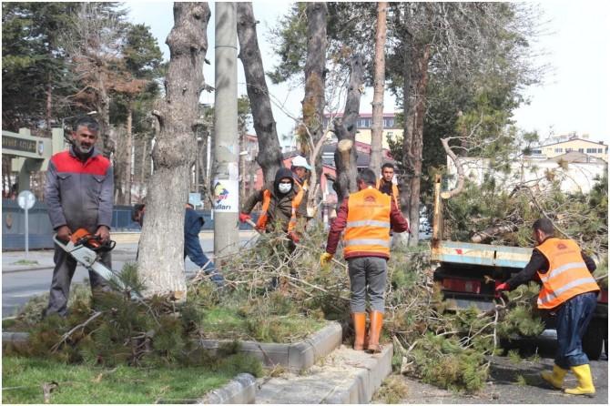 Tatvan'da park ve bahçelerde çimlendirme ve ağaç budama çalışması başladı