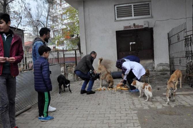 İçişleri Bakanlığından sokak hayvanları için genelge