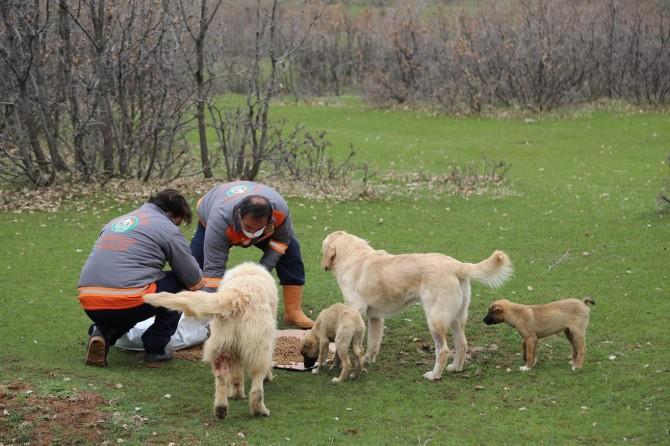 Bingöl Belediyesi sokak hayvanlarını unutmadı
