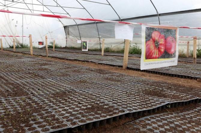 Van Büyükşehir Belediyesi yerli tohum üretimi yapıyor