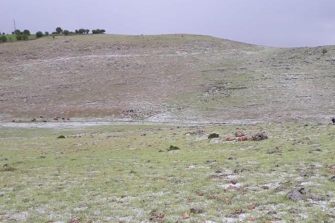 Çınar Ağaçsever'de dolu yağışı etkili oldu