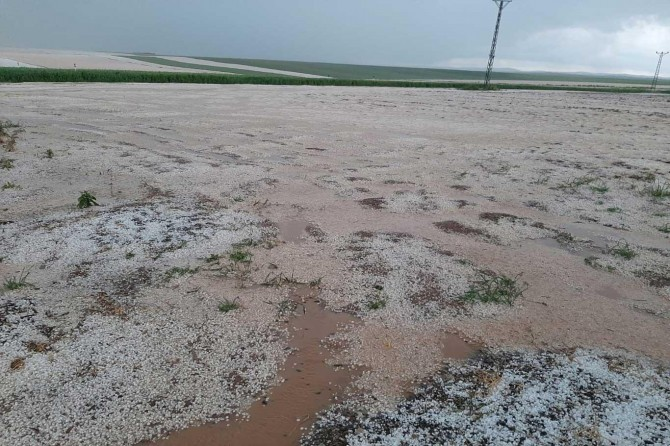 Çınar Yaprakbaşı'nda mayıs ayında yağan dolu tarlaları beyaza bürüdü