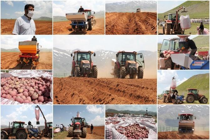 Ahlat Tarım Havzası'nda patatesin ilk tohumları toprakla buluşturuldu