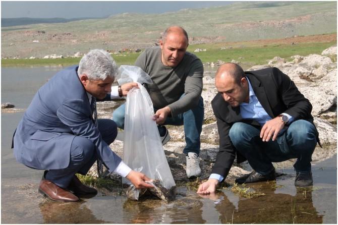 Bitlis'te Tarım İl Müdürlüğü tarafından göllere 70 bin yavru sazan balığı bırakıldı