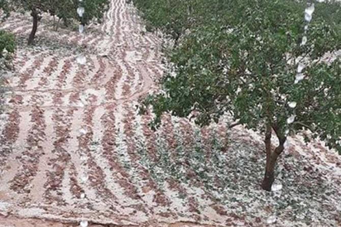 Şanlıurfa Bozova ve Karaköprü ilçelerinde etkili olan dolu yağışından dolayı fıstık bahçeleri zarar gördü