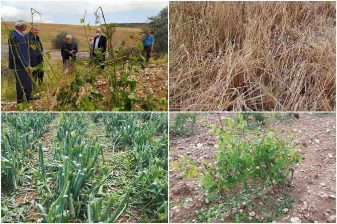 Adıyaman'da doludan zarar gören tarım arazilerinde hasar tespit çalışması