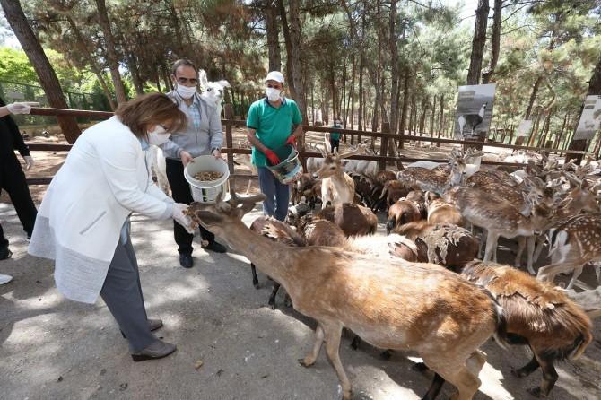 Gaziantep Hayvanat Bahçesi 15 Haziran'da kapılarını yeniden açıyor