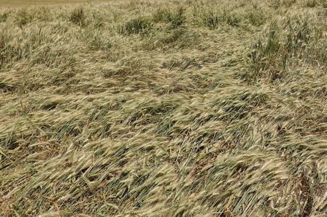 Ceylanpınarlı çiftçiler: Yıllardan beri yaptığımız işin karşılığını alamıyoruz