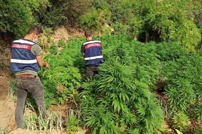 Mardin'de uyuşturucu operasyonunda 2 kişi yakalandı