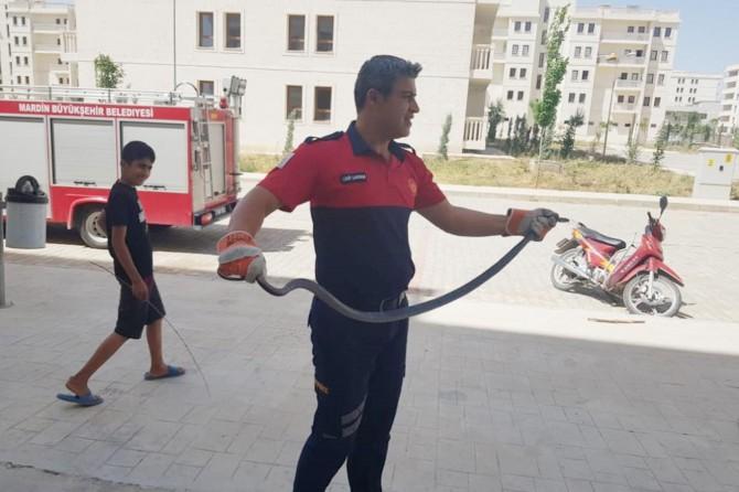 Nusaybin'de apartmana giren yılan korku dolu anlar yaşattı
