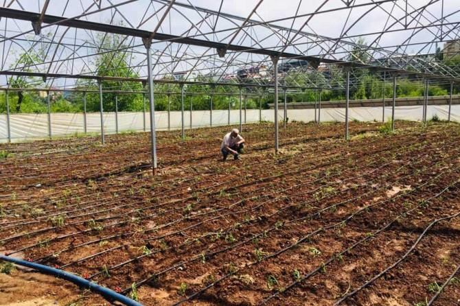 Bingöl'de bir avuçla başlanan yerli tohum çalışmaları milyonlara ulaştı