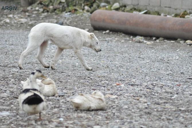 Alaşehir'de sokak köpeğine kötü muamelede bulunan şahsa para cezası