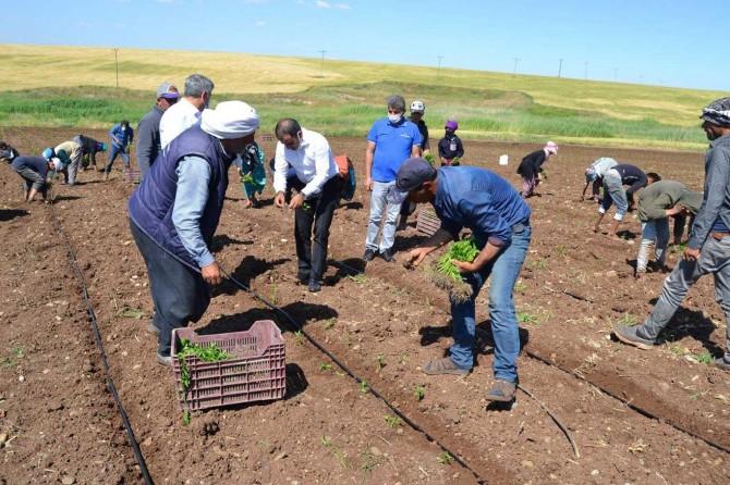 Pandemi döneminde çalışmaya devam eden tarım işçilerine teşekkür ziyareti